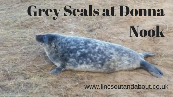 Visit the Grey Seals at Donna Nook