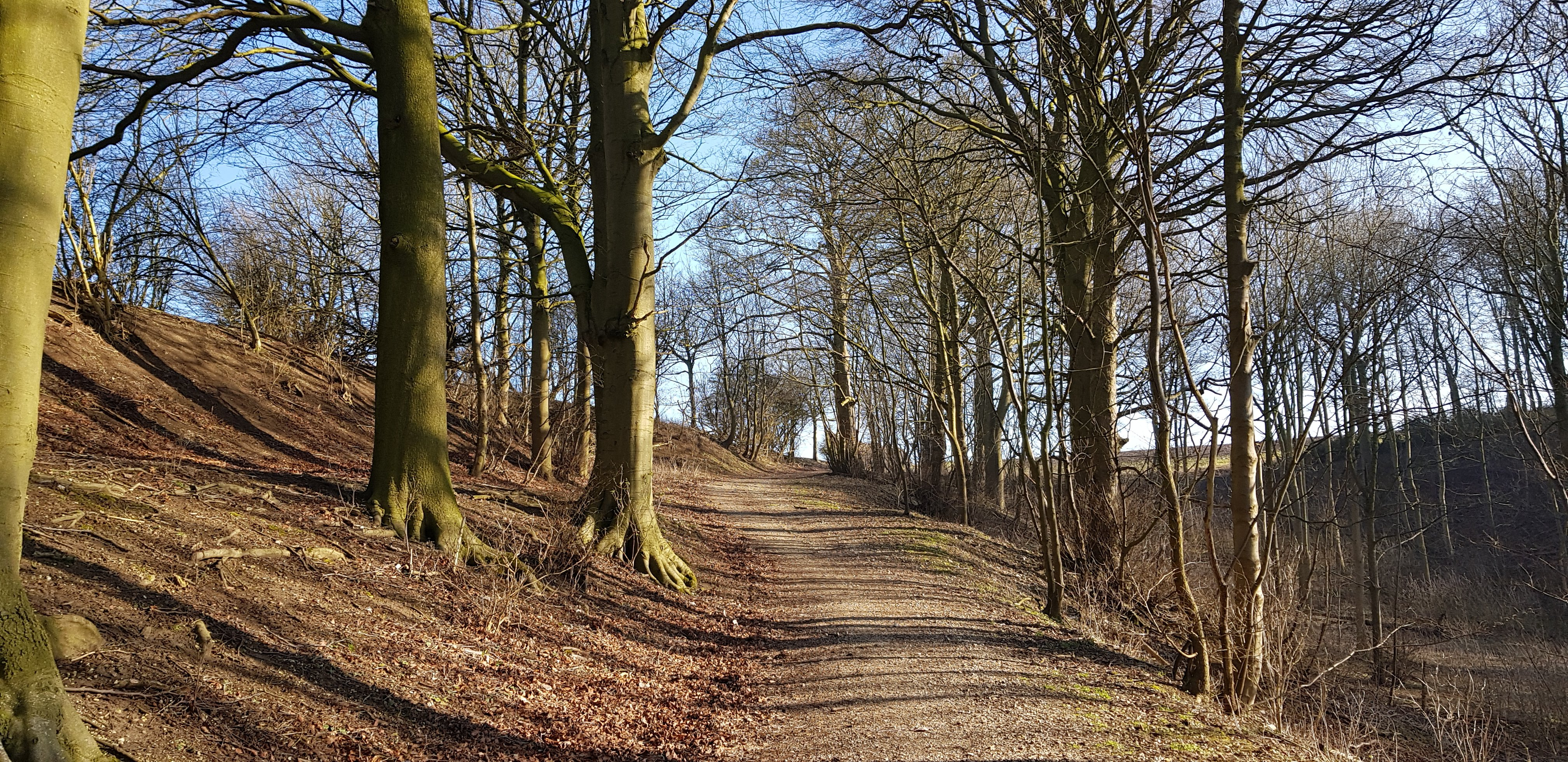 Footpath through a wood near Donington on Bain